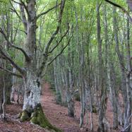 Els boscos de Viladrau